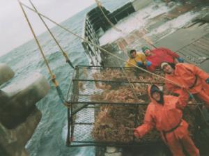 crab catching at sea