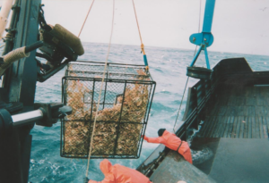 dragging crab out of the sea