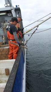 sea catching