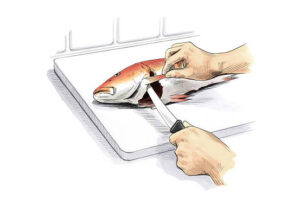 cutting filleting fish